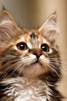 This little kitty is over the top cute don't you think?