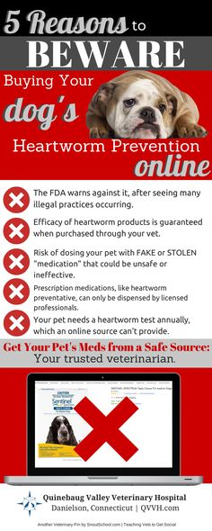 Don't buy your dog heartworm preventative from an unsafe source - get it from your veterinarian. More pet health tips at QVVH.com