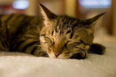 日中眠い時にシャキッと目を覚ます方法 | nanapi [ナナピ]