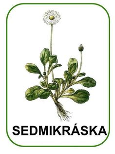Spring Activities, Activities For Kids, Crafts For Kids, Elementary Science, Spring Flowers, Montessori, Plant Leaves, Flora, Kindergarten