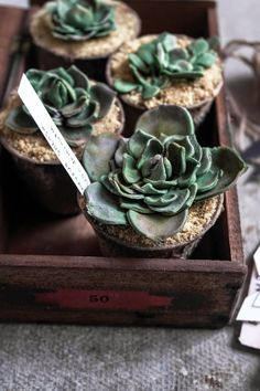 Succulent Cupcakes: chocolate sponge+chocolate frosting+crushed biscuit w brown sugar sand & leaves from sugar paste
