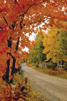 I love the beauty of fall leaves and winding country roads - it makes me want to road trip!