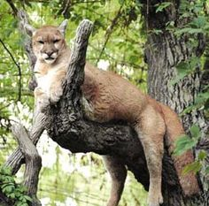 East Texas wildlife