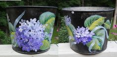 Hydrangeas sap bucket