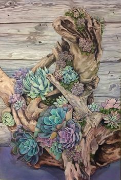 Succulents on driftwood. Aqua Duo oil paints.