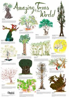 amazing trees of the world