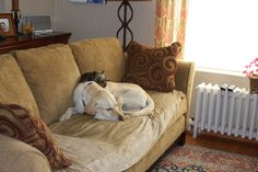 The picture shows shows our Labrador Retriever, Mica, and our Yorkshire Terrier, Bailey, sleeping on our favorite couch, with some winter sun filtering in to warm them.  Bailey likes to climb up and nap on top of Mica.  This was not a posed photo.