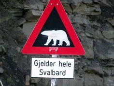 Einmal Spitzbergen und zurück | Aufpassen Eisbären – Spitzbergen (c) Hanka Koebsch