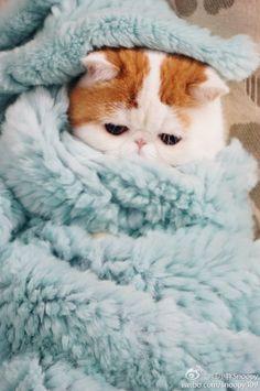 il fait froid dehors