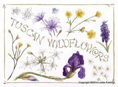 Everyday Artist: Sketchbook Journeys - Italy: Day 13 (Tuscan Wildflowers)