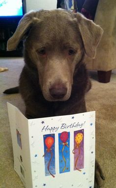 """""""Every year, I remind you I can't read. And yet, here we are again."""" 