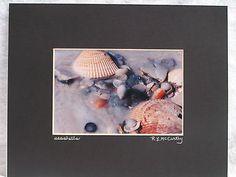 ART SEASHELLS Unique GIFT  Matted 8x10 Photograph #376