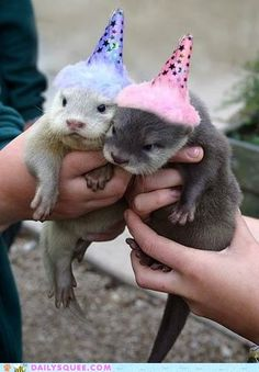 Baby Otters // #AnimalPractice  this is what i want for my birthday