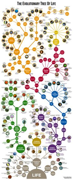 My chart in BBC Focus Magazine – UsefulCharts Engineering Science, Teaching Science, Science And Technology, Earth And Space Science, Science And Nature, Process Of Evolution, Tree Of Life Evolution, Mind Map Art, Dna Art