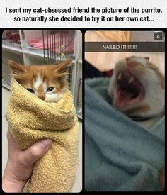 Funny pictures about Not All Cats Want The Purrito. Oh, and cool pics about Not All Cats Want The Purrito. Also, Not All Cats Want The Purrito photos. Funny Animal Memes, Cute Funny Animals, Funny Animal Pictures, Cute Baby Animals, Cat Memes, Funny Cute, Funny Memes, Hilarious, Funny Fails
