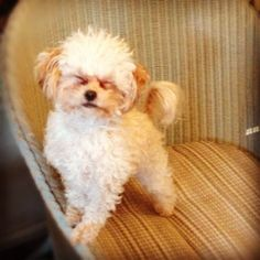This #dog just closes #her #eyes fully awake on this #wicker dining #chair #lol #funny