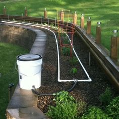 Garden with homemade irrigation!!