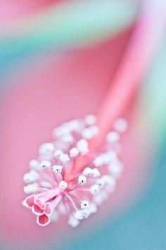 by poesie, via Flickr