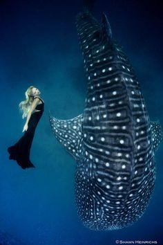 Danse avec les Baleines – Superbes photos sous-marines