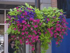 I love this, looks like sweet potato vine and petunias, not sure what the purple flower is...