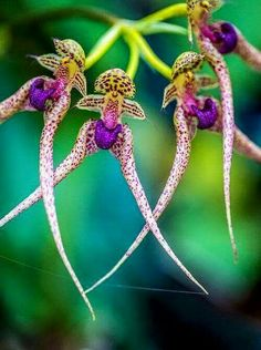 Terrific Photos Orchid Flower good morning Strategies Do you possess a stunning orchid at your house that you aren't pretty sure exactly how to tend to? Strange Flowers, Unusual Flowers, Unusual Plants, Rare Flowers, Exotic Plants, Amazing Flowers, Beautiful Flowers, Orchid Flowers, White Orchids