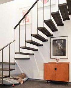 weimaraner! architecture by Deborah Berkevia Desire to Inspire