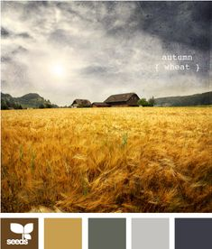 autumn wheat.. ok, i think i have finally found it... these are the colors for baby's room.... mustard, stormy blue/gray, cream and brown... with a little green here and there.