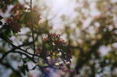 sunday meditation :: twenty-six | Flickr - Photo Sharing!