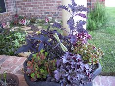 Container garden with dragonfly and garden path.  Favorite!