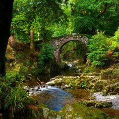 Tollymore Forest Park | Northern Ireland