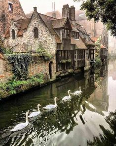 Foggy morning in Bruges. Bruges, the capital of West Flanders in northwest Belgium, is distinguished by its canals, cobbled streets and medieval buildings. Oh The Places You'll Go, Places To Travel, Places To Visit, Travel Destinations, Belle Photo, Wonders Of The World, Travel Photos, Europe Photos, Beautiful Places