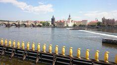 Fotogalerie: Praha, Kampa, Karlův most New York Skyline, Travel, Prague, Pictures, Cities, Viajes, Destinations, Traveling, Trips