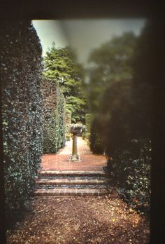 hedge maze @Robyn Wilkens