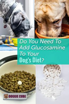 Does your dog have joint problems such as arthritis or hip dysplasia? Glucosamine for dogs can help restore its health. This supplement can be added to dog food or treats for a healthy diet.