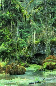 Temperate Rainforest - Tongass National Forest, Alaska.