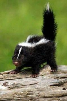 aww!! adorable little black & white precious!