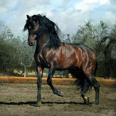 """The horse he rode was a huge dark bay with a small white star obscured by his forelock. His mane was thick and black and thunder rolled under prancing hooves, even though he had white specks of sweat all over him, he was impatience to move out of his walk. """"Easy there Gerasimos"""" I heard him say Alex is watch from the trees then she see Euphoros being ridden but she bucking and rearing"""