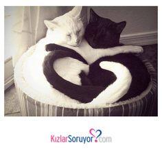 #Merhaba #kedi #kediler #cats