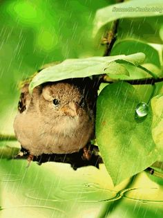 Bird hiding from rain. !IEC