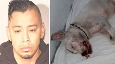 MMA fighter tosses puppy in washing machine and pounds the pet for TWO HOURS! Sign Now! | YouSignAnimals.org