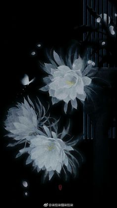 Epiphyllum in the night Fantasy Art Landscapes, Fantasy Landscape, Pics Art, Art Pictures, Flower Wallpaper, Wallpaper Backgrounds, Crisantemo Tattoo, Art Asiatique, Pretty Wallpapers