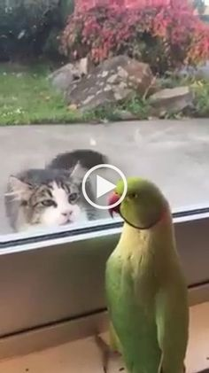 fact that cat want's to eat that bird is bothering me - Smart cats, cute birds, green parrots, glass doors Funny Cute Cats, Funny Birds, Funny Cats And Dogs, Cute Birds, Cute Cats And Kittens, Cute Funny Animals, Beautiful Cats, Animals Beautiful, Animals And Pets