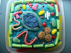 ahhh! i made one awesome cell project when i was little (tho not this one). i… Edible Cell Project, Plant Cell Project, Animal Cell Project, Science Cells, Science Biology, Teaching Science, Science Toys, Plant Science, Ap Biology