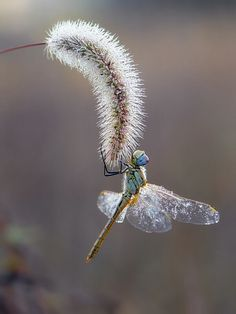 Autumn dragonfly