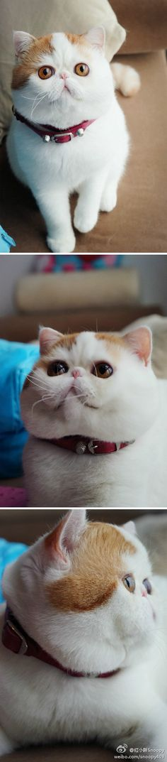 This is the most adorably ugly cat I have ever seen.