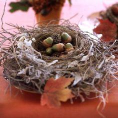 Nest and acorns . . .