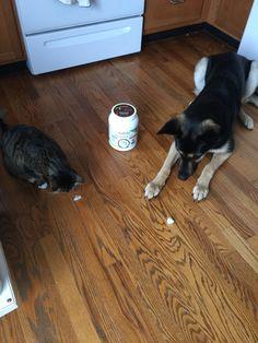 Meet Julius + Olive. #Pets #Love #Nutiva #CoconutOil nutiva.com #JuliusOlive #Cat #Dog