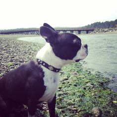 Low tide means lots of smells! by humphreytheboston
