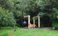 Ryan Gander at Chapultepec Zoo