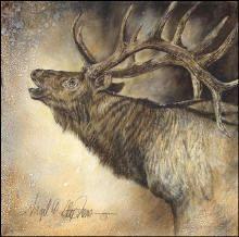 giclee print of Rocky Mt Elk